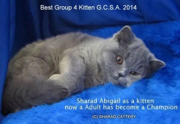 Gr Ch Sharad Abigail