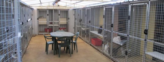 Sharad Cattery based in northern Adelaide