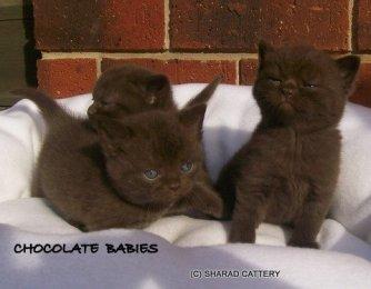 Chocolate Babies