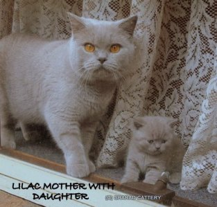 Lilac Mother with Daughter