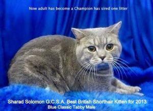 Ch Sharad Solomon